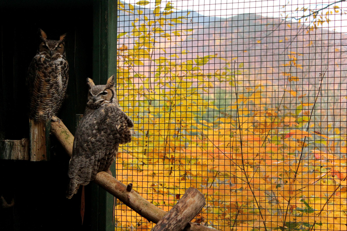 Adirondack Wildlife Refuge and Rehab Center makes it easy to view wildlife.