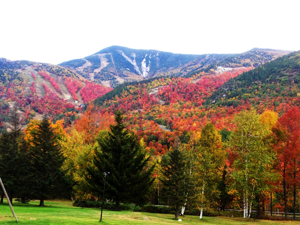 Whiteface in fall