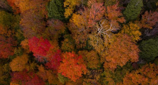 An aerial view of orange, yellow, and red trees with a snow-covered Whiteface Mountain in the background