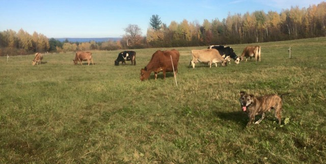 North Country Creamery has a different geography, with more plains, and nearer the coast of Lake Champlain.