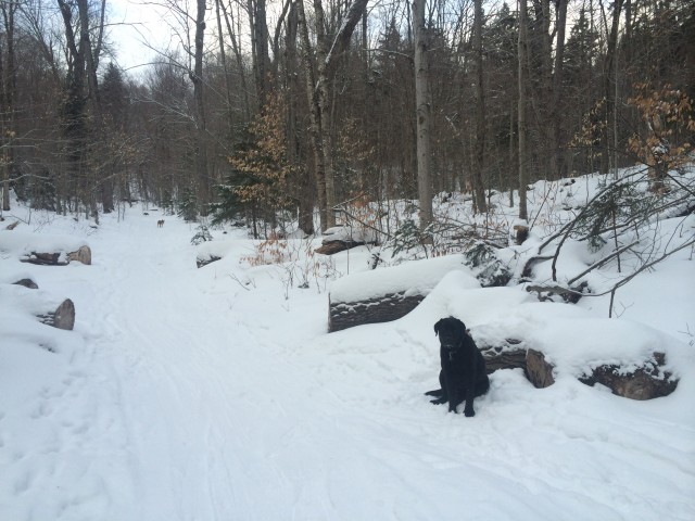 dogs on whiteface landing trail