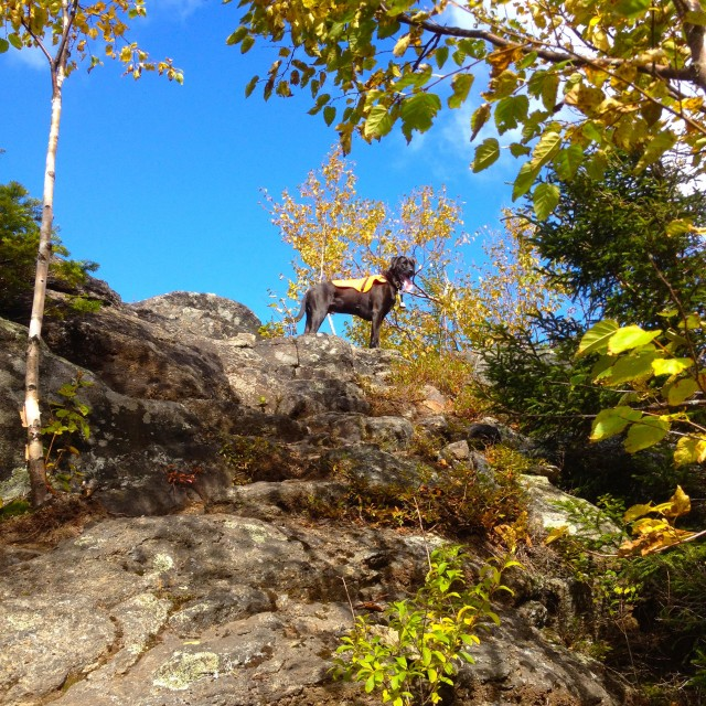 Duke atop Jay Mountain