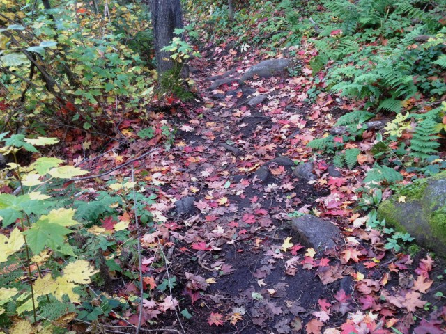 Red and Sugar Maple leaves cover the trail