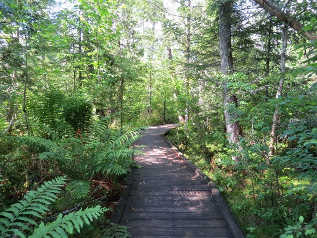 Boardwalk trail at Silver Lake Bog, photo by Joan Collins