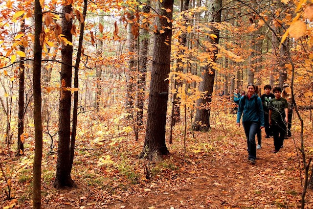 Hike in the crisp air, when the forest turns a deep, magical gold.