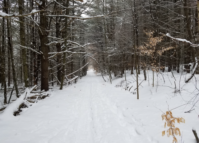 The trails are amazing and so beautiful to travel.