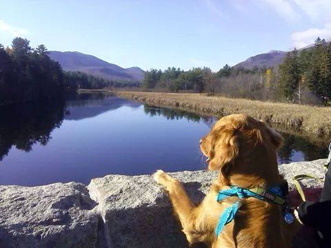 Sightseeing, traveling with a dog