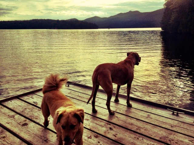 Whiteface Landing with dogs